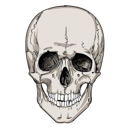 fallen: human skull isolated on white