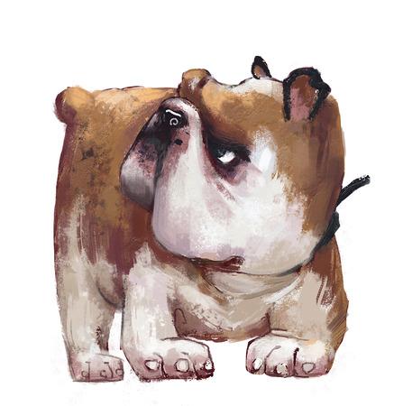 cute english bulldog Stock fotó