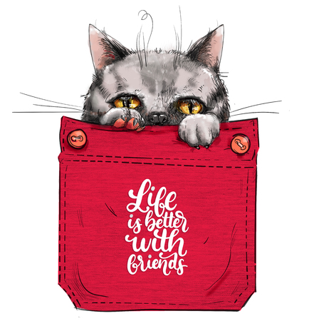 little gray cat in red pocket with lettering. Imagens