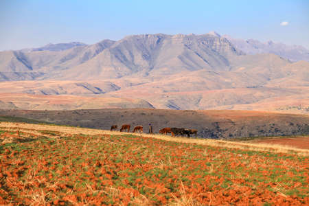 Dramatic beautiful mountain landscape with terrassed fields during spring, Lesotho, Southern Africa