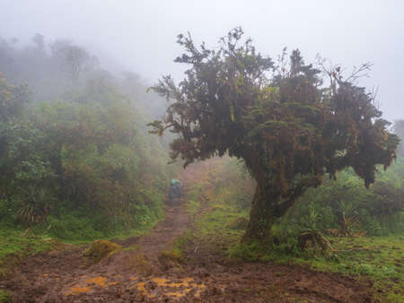 Foggy path in the Chachapoyas