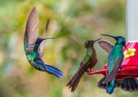 A group of hummingbirds around a feeder
