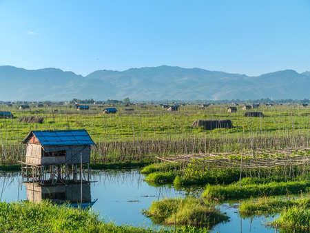 Floating gardens on Inle Lake, Myanmar 写真素材