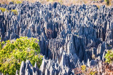 The great Tsingy de Bemaraha of Madagascar Imagens