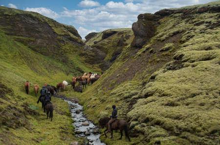 Icelandic Ponies trail ride through icelandic landscape