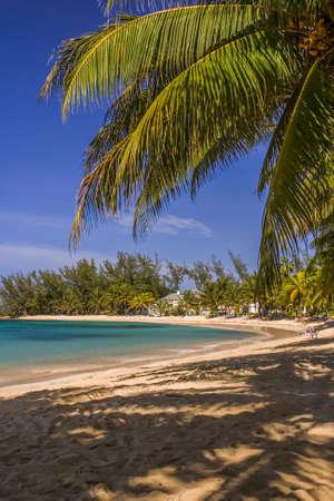 Palm tree over a caribbean beach, Jamaica
