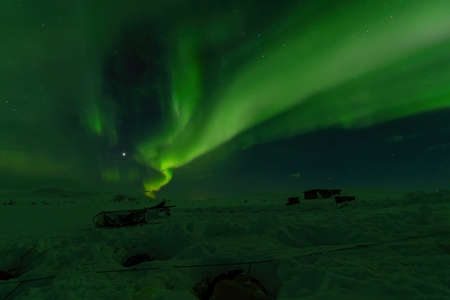 Northern lights Aurora Borealis over sled dogs sleeping in Lapland, Sweden