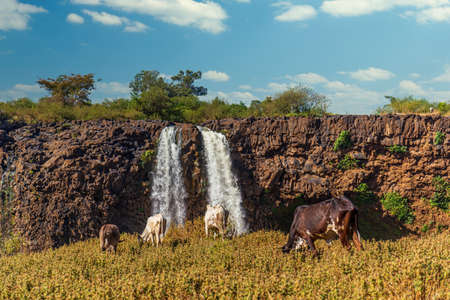 Tiss abay Falls on the Blue Nile river, Ethiopia Archivio Fotografico