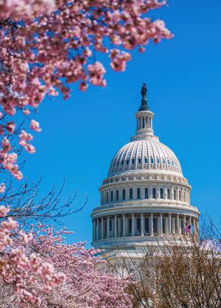 Capitol Building framed by cherry blossom, Washington DC - USA Imagens