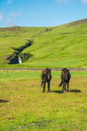 Two icelandic horses standing in front of a little waterfall - Iceland