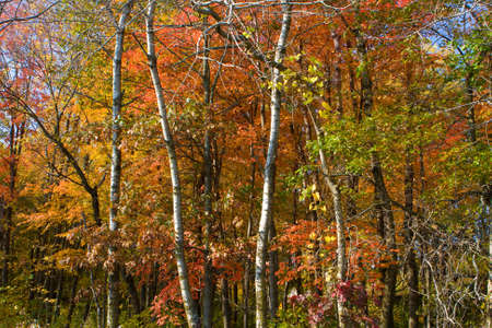 Fall colors in the month of October Stock Photo