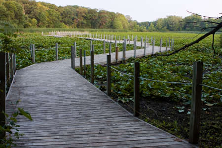 floodplain: A Boardwalk winds its way over a Swamp.