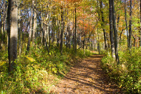 A walk down this path to see the great fall colors. Banco de Imagens