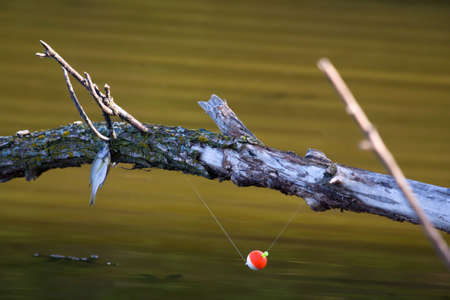Fish and line snagged on a tree branch. photo