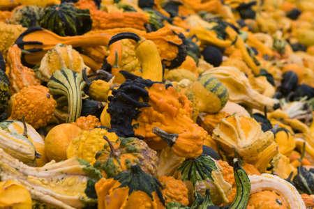 A mountain of Gourds during the fall season.