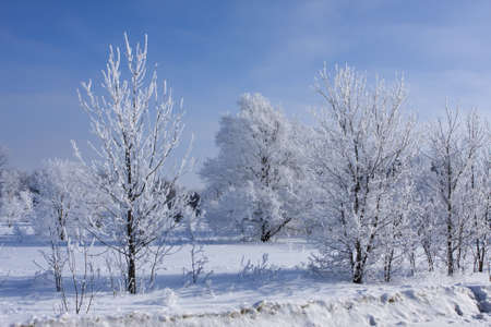 winter: A thin layer of fresh snow covers the trees making a beautiful winter scene. Stock Photo