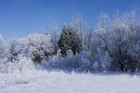 A thin layer of fresh snow covers the trees making a beautiful winter scene. Imagens