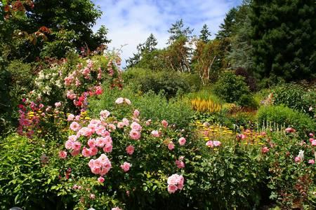 Mooie bloementuin in volle bloei zomers.