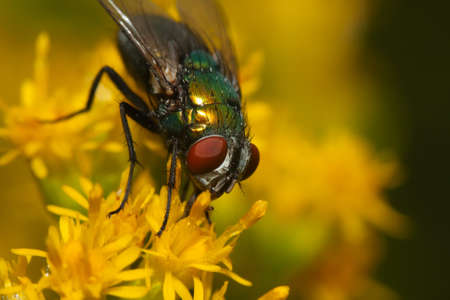 Macro of a fly on a yellow flower. Stock Photo - 10690676