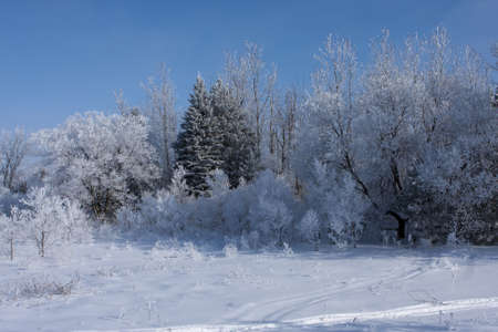 Fresh snow covers trees and bushes in a field.