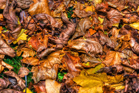 gr: Background of a layer of beautiful Autumn Leaves in HDR High Dynamic Range
