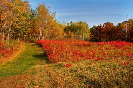 Fall colors in the meadow from Minnesota in HDR. photo