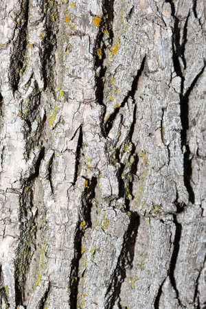 Background of bark on an old tree. photo