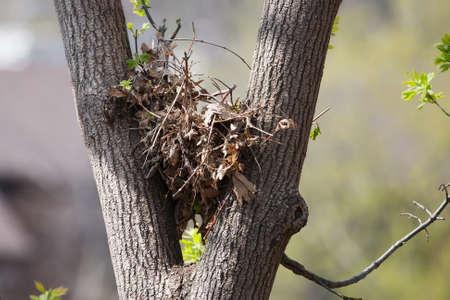 Albero scoiattolo nido in alto in un albero frondoso.