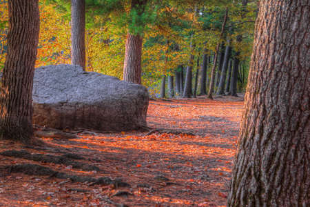 HDR landscape of a forest and large rock Stock Photo