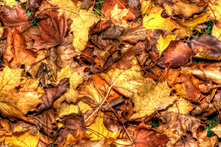 Beautiful Autumn Leaves in HDR High Dynamic Range in soft focus Stock Photo