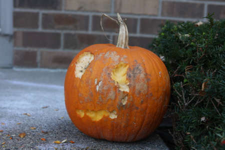 ate: Scary pumpkin face carving that animals ate