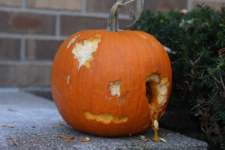 Scary pumpkin face carving that animals ate