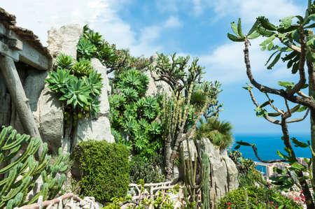 A fragment of a garden of cacti and succulents in Monaco  Jardin Exotique de Monaco