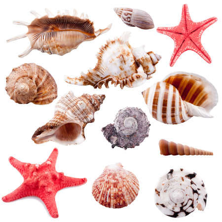 Shell collection, isolated photo
