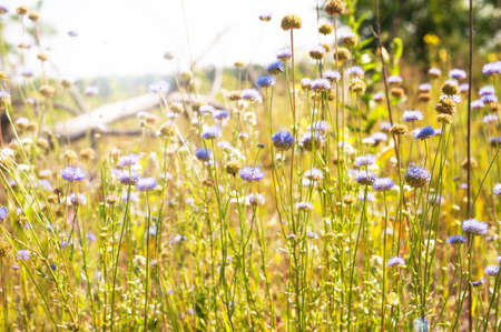 Sunny meadow with purple flowers in the foreground Stock Photo