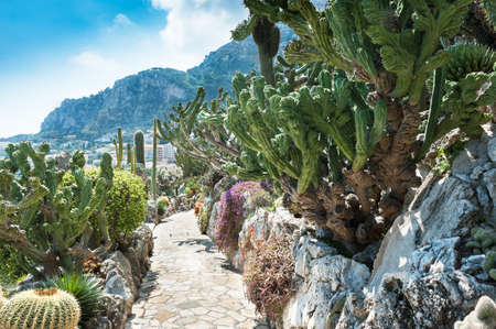 Fragment of a garden of cacti and succulents in Monaco  Jardin Exotique de Monaco  Stock Photo