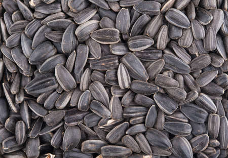 Sunflower dry seeds background with detail closeup