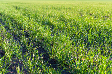 Green grass abstract texture background Stock Photo