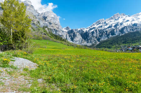 Field with dandelions on a background of the Bernese Alps Stock Photo