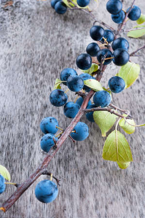 Branch sloe berry on a old textured wooden background