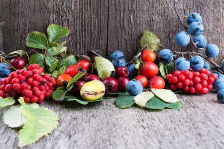 Autumn berries on old wooden surface photo
