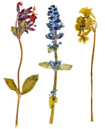 Set van wilde alpiene bloemen gedrukt, geïsoleerde
