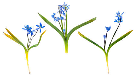 Set of wild spring flowers pressed, isolated