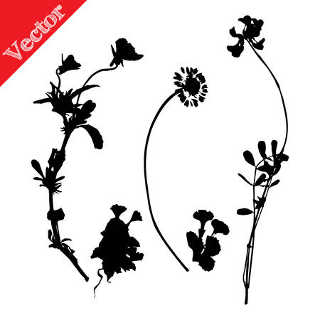 Set illustration with wild flowers silhouettes