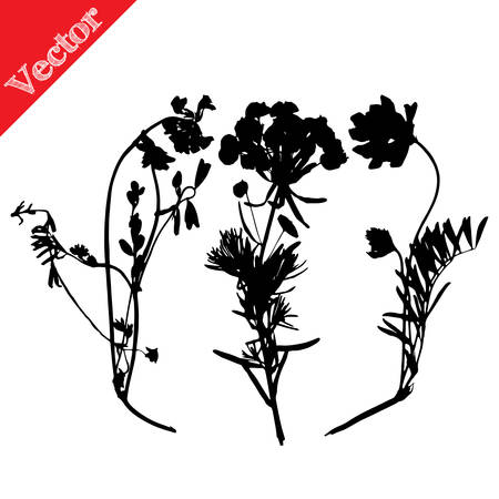 buttercup: Set illustration with wild flowers silhouettes