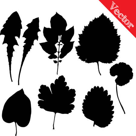 Set of silhouettes of leaves of trees and flowers isolated on white vector