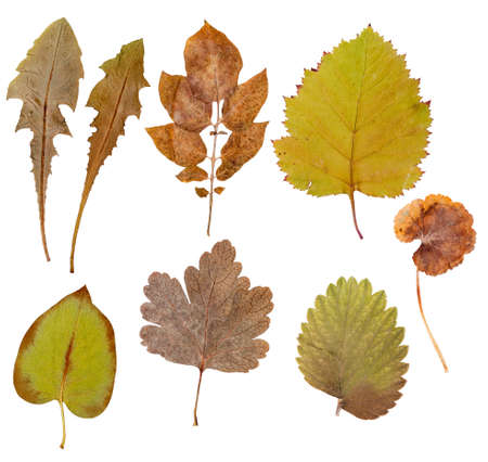 Leaves of various flowers and trees, isolated on white