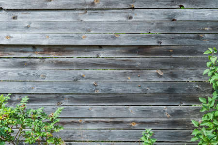 Background of wooden planks in the frame bushes
