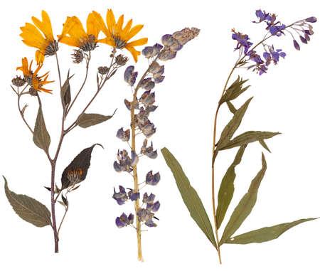 白で隔離される様々 な花の葉 写真素材
