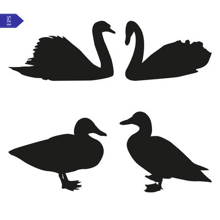 swan: Set of vector silhouettes of swans and ducks